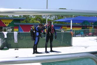 Dive-2